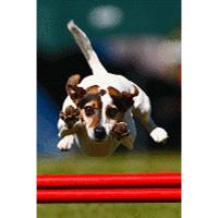 PSV-Salzburg-Hund